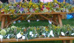 Czytaj więcej: Przygotowanie bukietów z ziół i kwiatów